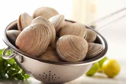 fresh clams in a colonder